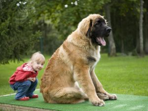 large family dog