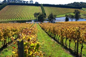 Mornington Peninsula Winery