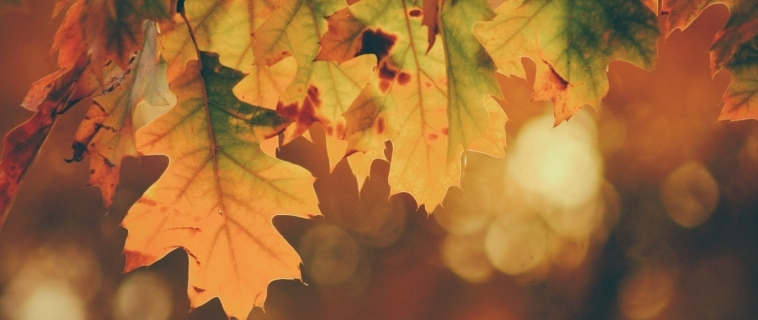 Autumn Decorating Tips for the Home
