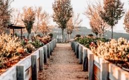 The Best Tips for Autumn Gardening