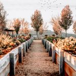 Outdoor autumn garden
